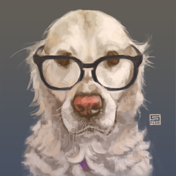 Realistic portrait of a white golden retriever wearing black-rimmed glasses.